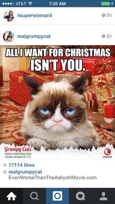 Ohhhh grumpy cat!