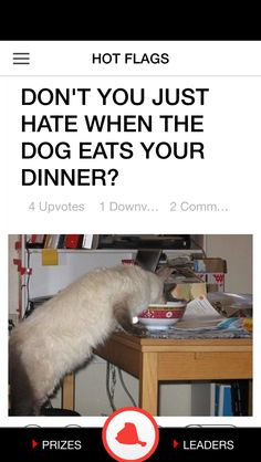 Dog Eating, Flag, Dinner, Dining, Food Dinners, Flags