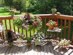 Potted flowers (photo by nancy bortz)