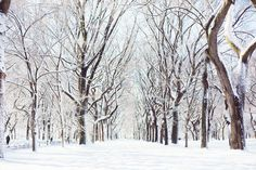 Winter in Central Park by Carin Olsson (Paris in Four Months)