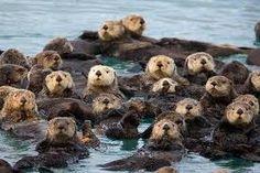 california Sea Otter Game Refuge below Carmel, California
