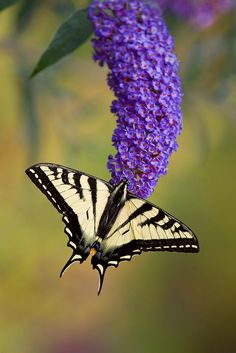 We are like butterflies who flutter for a day and think its forever.  Carl Sagan