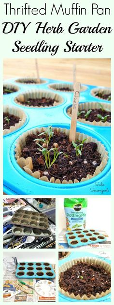 Vintage muffin pan tin from thrift store repurposed and upcycled into DIY herb and vegetable seedling starter pots by Sadie Seasongoods / www.sadieseasongoods.com