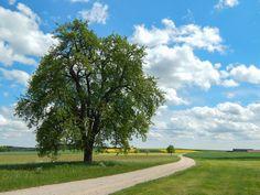 Tree in summer by Marc Kunze on 500px
