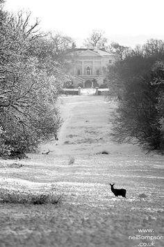 Richmond Park Deer (and geese) in the snow - London by Talk Photography