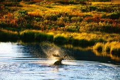 A Great Selection of Nature and Wildlife Photos from Yukon Canada by Peter Mather