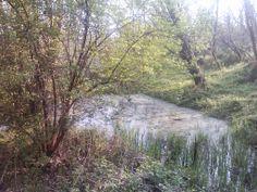 Stagno nella Penisola di San Gervasio a Capriate (BG), vicino a Crespi d'Adda e a Trezzo (MI), Parco Adda Nord sul fiume Adda.