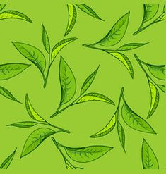 Seamless pattern with green tea leaves on green background. Hand painting on paper. May used in fabric, wrapping paper. Green Tea Plant, Hug Illustration, Tea Wallpaper, Tea Logo, Tea Design, Leaf Drawing, Tea Art, Green Backgrounds, Botanical Prints