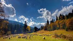 Garden of Eden by Belianske Tatry on Landscape Photos, Landscape Photography, Tatra Mountains, Garden Of Eden, Cool Landscapes, Flora, Places, Nature, Travel