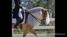 Znalezione obrazy dla zapytania fryzury dla koni