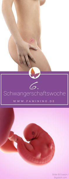 6. SSW (Schwangerschaftswoche)