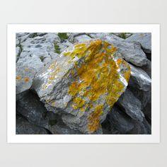 Lichens Art Print - on the Atlantic Coast in the Burren, Co.