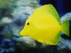 Oil on canvas by CSH                           CSH's 3rd work                           'Zebrasoma flavescens'