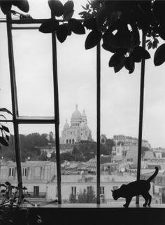 Un chat et la vue sur Montmartre by  Elisabeth Toll