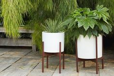 Ooo we just got a big shipment of Modernica pots! Come on down and browse.  #floragrubbgardens #midcenturydesign #instocknow