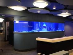 Crazy aquariums on Tanked on Animal Planet - Orthodontist tank.
