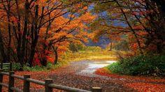 L'autunno è la stagione sempre magica quando la verdura e la frutta sono ancora baciati dal sole e regalano ai buongustai prodotti con una ricca varietà di sapori e colori. I boschi si tingono di colori caldi come il giallo e il rosso e offrono profumati funghi, castagne, frutti di bosco, i v