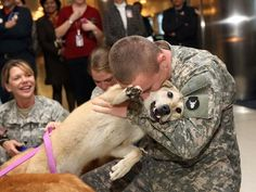 These army dogs demonstrate that dogs are the most loyal animals, they are far more loyal than people