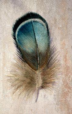 Gorgeous petrol, turquoise feather | Boho insipiration