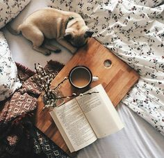 Some bedding + morning with a dog = Perfection