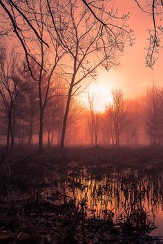Misty Morning  by Chad Briesemeister