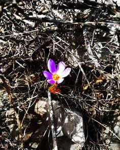 Apiranthos Naxos Dimitris Glezos  #apiranthos #naxos #greece #dimitrisglezos