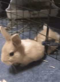 Things that make you go AWW! Cute Baby Bunnies, Funny Bunnies, Cute Funny Animals, Cute Baby Animals, Animals And Pets, Cute Babies, Cute Bunny Pictures, Animal Pictures, Bunny Care