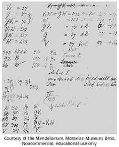 Mendel's notes on pea plant experiments
