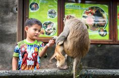 Hong Kong's Monkey Mountain is located in Kam Shan Country Park in northern Kowloon. It is the closest Hong Kong country park to the Kowloon urban area. Kangaroo, Hong Kong, Monkey, Urban, Park, Country, Animals, Baby Bjorn, Jumpsuit
