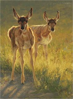 baby pronghorn antelope painting by Greg Beecham