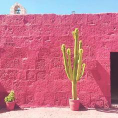 pink background | cactus | travel