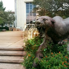 A BlendPic of a photo of the Cougar statue I took on campus and my University of Houston class ring. University Of Houston, Class Ring, Street Art, Lion Sculpture, Elephant, Statue, Animals, Animales, Animaux