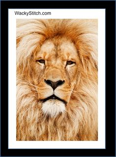 Lion Face - Counted Cross Stitch