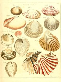 v 1- 2. - The genera vermium exemplified by various specimens of the animals contained in the orders of the Intestina et Mollusca Linnaei : ...