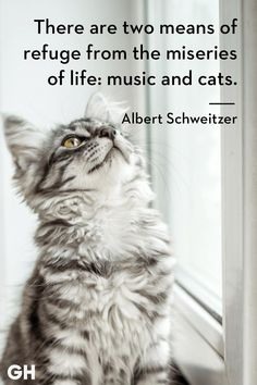 Here are some cat quotes that pretty much hit the nail on the head! Catch Cat Quotes Sum Up Cats Purr-fectly - World's largest collection of cat memes and other animals Cute Animals With Funny Captions, Funny Cat Pictures, Cute Baby Animals, Animal Pictures, Cutest Animals, Cool Cats, I Love Cats, Funny Cat Memes, Funny Cats