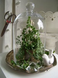 The love for Cloches...