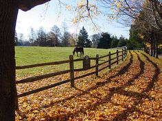 A horse grazing on a picturesque Cape Cod fall day on County Road in Cataumet, Massachusetts.