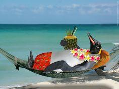 Giornata di relax... su LIBERA NO DOMINE