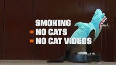 Published on Feb 2016 Fact: Cats are twice as likely to get cancer if their owner smokes. Smoking = No Cats = NO Cat videos. Get on board with Pirate Cat, Shark Cat, Lil BUB and Aaron's Animals to help prevent I Quit Smoking, Smoking Kills, Anti Smoking, Crazy Cat Lady, Crazy Cats, Teen Attitude, Best Cat Gifs, Pirate Cat, Smoking Cessation