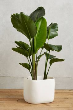 Sculpted Planter | Anthropologie