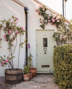 Rolling Meadows, Daisy Field, Dappled Light, Rose Cottage, English Countryside, House Front, Outdoor Spaces, Outdoor Living, Outdoor Gardens