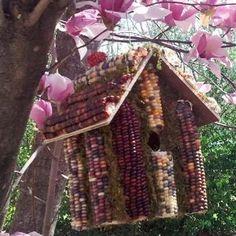 Corn Birdhouse Bird Feeder is   everyone's favorite corn cob edible birdhouse.