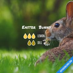Easter Bunny - Essential Oil Diffuser Blend