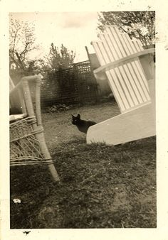 This black cat creepin', '30s | 30 Delightful Cat Photos From The '30s
