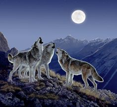 Find each work of art wonderfully reproduced in our highest quality microfiber cleaning cloth. Wolf Images, Wolf Photos, Wolf Pictures, Animal Paintings, Animal Drawings, Wolf Howling At Moon, Baby Wolves, Red Wolves, Wolf Artwork