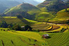 Vietnam: les rizières en terrasse de Mu Cang Chai. Image: Twitter Voyage: Vingt lieux exceptionnels à voir absolument - Société - lematin.ch