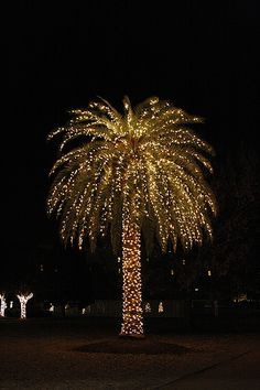 Blessed I get to see this at Christmas time :) Christmas Palm Tree - Charleston, SC