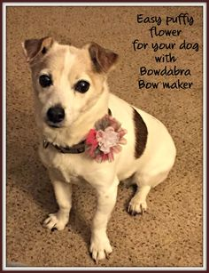 Bowdabra Mini Bow Maker Flower Puff Dog Collar Bling