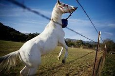 Camarillo stallion playing ball