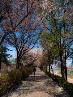 Spring - Seoul, South Korea